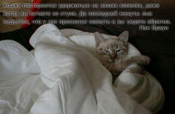 Что можно сказать о характере человека который не любит кошек