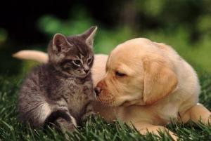 Пет-терапия: влияние домашних животных на человека