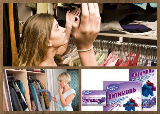 Весенняя профилактика: как избавиться от моли в квартире