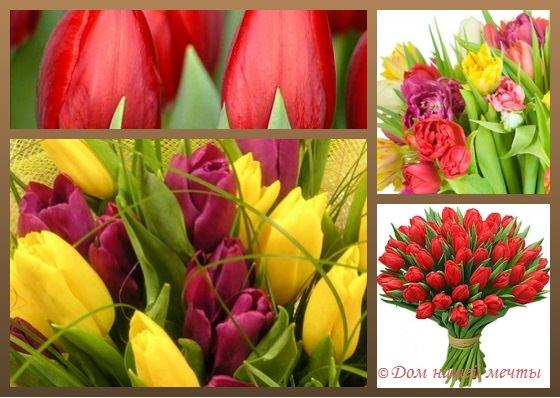 Тюльпаны на языке цветов