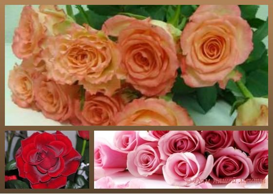 Какой букет цветов подарить мужчине