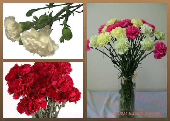 Какие цветы для мужчин