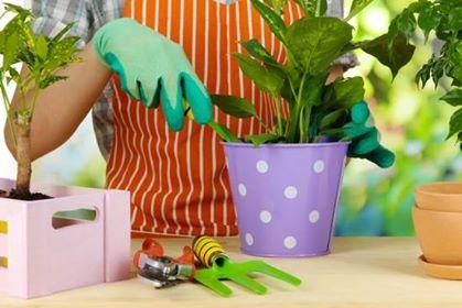 Пересаживаем комнатные растения по лунному календарю