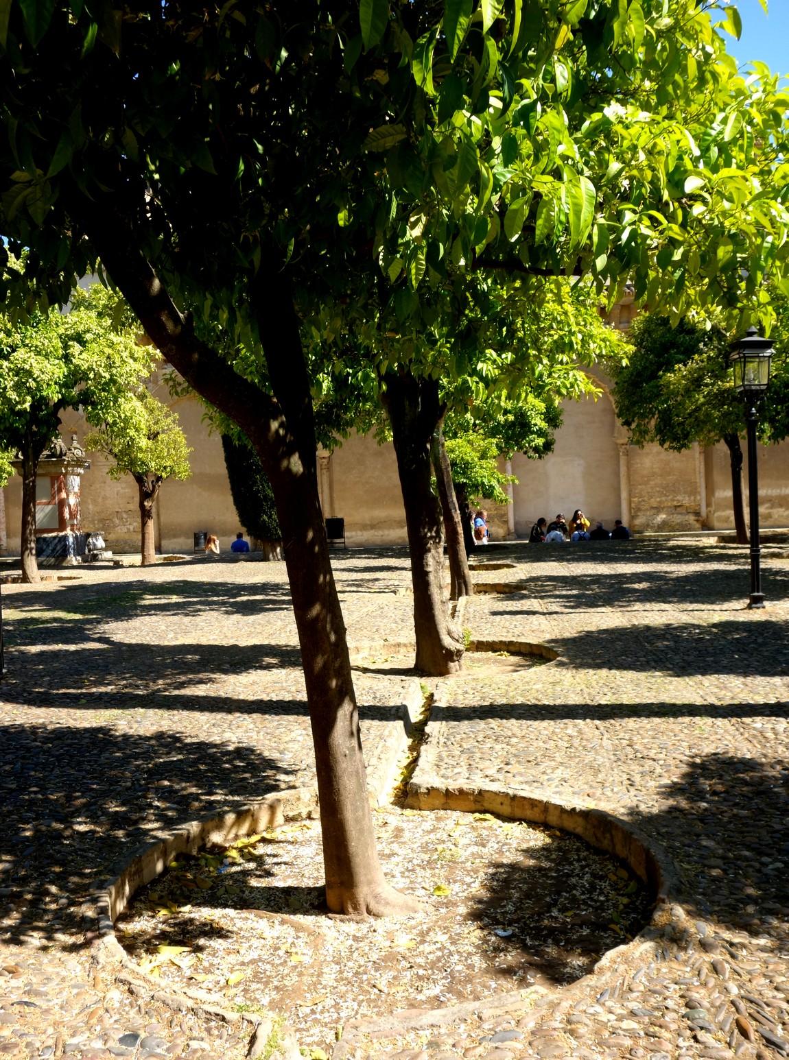 Собор Мескита в Кордове, Испания